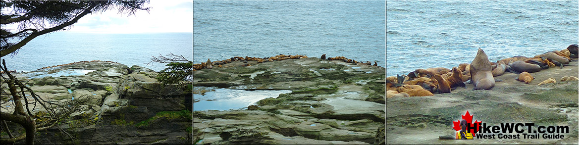 Sea Lion Haul Out Rock on the West Coast Trail